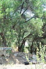 nature near Agios Gordis | Corfu | Ionian Islands | Greece  - Photo 2 - Photo JustGreece.com