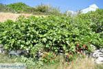 Arkasa (Arkassa) | Karpathos island | Dodecanese | Greece  003 - Photo JustGreece.com