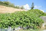JustGreece.com Arkasa (Arkassa) | Karpathos island | Dodecanese | Greece  004 - Foto van JustGreece.com