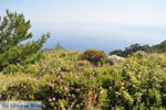 nature in the oosten of Karpathos | Greece  007 - Foto van JustGreece.com