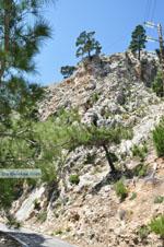 nature in the oosten of Karpathos   Greece  Photo 009 - Photo JustGreece.com