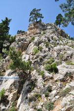 nature in the oosten of Karpathos | Greece  Photo 010 - Photo JustGreece.com