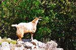 JustGreece.com Antisamos - Antisami - Cephalonia (Kefalonia) - Photo 247 - Foto van JustGreece.com