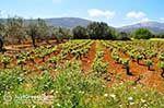 Robola wijnstreek - Cephalonia (Kefalonia) - Photo 263 - Photo JustGreece.com
