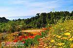 Trapezaki - Cephalonia (Kefalonia) - Photo 346 - Photo JustGreece.com