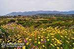 Schiereiland Paliki - Cephalonia (Kefalonia) - Photo 535 - Photo JustGreece.com