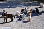 Poesjes and katten near the Asclepeion | Island of Kos | Greece Photo 2 - Photo JustGreece.com