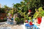 Kos town (Kos-town) | Island of Kos | Greece Photo 55 - Photo JustGreece.com