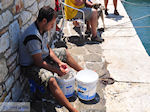 Naoussa Paros | Cyclades | Greece Photo 40 - Photo JustGreece.com