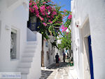 JustGreece.com Naoussa Paros | Cyclades | Greece Photo 76 - Foto van JustGreece.com