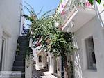 Naoussa Paros | Cyclades | Greece Photo 83 - Photo JustGreece.com