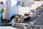 Pserimos Greece | Greece  | Photo 33 - Photo JustGreece.com