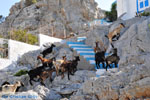 Pserimos Greece | Greece  | Photo 36 - Photo JustGreece.com