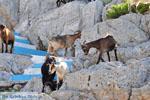 Pserimos Greece | Greece  | Photo 39 - Photo JustGreece.com