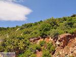 Groene struiken ergen on centraal Samos - Island of Samos - Foto van JustGreece.com