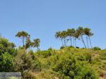 Groene nature of Samos - Island of Samos - Photo JustGreece.com