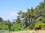 JustGreece.com The nature on the hills rond Karlovassi - Island of Samos - Foto van JustGreece.com