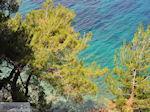 Bomen tot at the zee near Kokkari (beach Tsamadou) - Island of Samos - Photo JustGreece.com