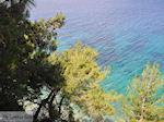 JustGreece.com Bomen tot at the water near Kokkari (beach Tsamadou) - Island of Samos - Foto van JustGreece.com