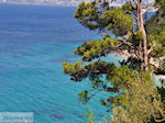 Bomen totat the beach of Kokkari (Tsamadou) - Island of Samos - Photo JustGreece.com