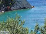 JustGreece.com Olive trees  tot at the zee - Lemonakia near Kokkari- Island of Samos - Foto van JustGreece.com
