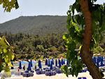 Makryammos - beach near Limenas (Thassos town) | Photo 3 - Photo JustGreece.com