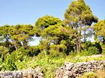Agios Leon Zakynthos | Greece | Greece  nr6 - Photo JustGreece.com