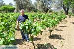 Mr Apostolos Lykos of wijnproducent of the firma Lykos   Euboea Greece   Greece  - Photo 001 - Photo JustGreece.com