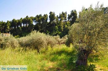Gouves North-Euboea | Greece | Photo 1 - Photo JustGreece.com