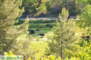 Noordoostkust Euboea | Greece | Photo 5 - Foto van JustGreece.com