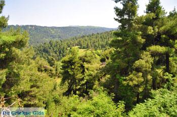 Mooie nature North-Euboea | Greece | Greece  Photo 1 - Photo JustGreece.com