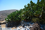 Folegandros - Island of Folegandros - Cyclades - Photo 186 - Photo JustGreece.com