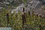 Folegandros - Island of Folegandros - Cyclades - Photo 191 - Photo JustGreece.com