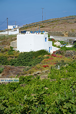 Ano Meria Folegandros - Island of Folegandros - Cyclades - Photo 229 - Photo JustGreece.com