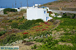 Ano Meria Folegandros - Island of Folegandros - Cyclades - Photo 230 - Photo JustGreece.com