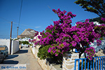 Chora Folegandros - Island of Folegandros - Cyclades - Photo 266 - Photo JustGreece.com
