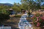 Livadi Folegandros - Island of Folegandros - Cyclades - Photo 276 - Photo JustGreece.com