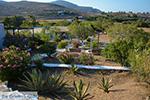 Livadi Folegandros - Island of Folegandros - Cyclades - Photo 279 - Photo JustGreece.com