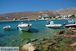 Karavostasis Folegandros - Island of Folegandros - Cyclades - Photo 318 - Photo JustGreece.com