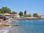 Agria Pilion - Magnesia - Thessaly - Greece  001 - Photo JustGreece.com