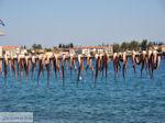 Agria Pilion - Magnesia - Thessaly - Greece  004 - Photo JustGreece.com