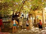 Kos town - Greece  Photo 47 - Photo JustGreece.com