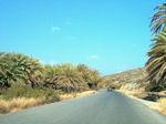 Vai Crete - Lassithi Prefecture - Photo 1 - Photo JustGreece.com