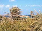 Vai Crete - Lassithi Prefecture - Photo 2 - Photo JustGreece.com