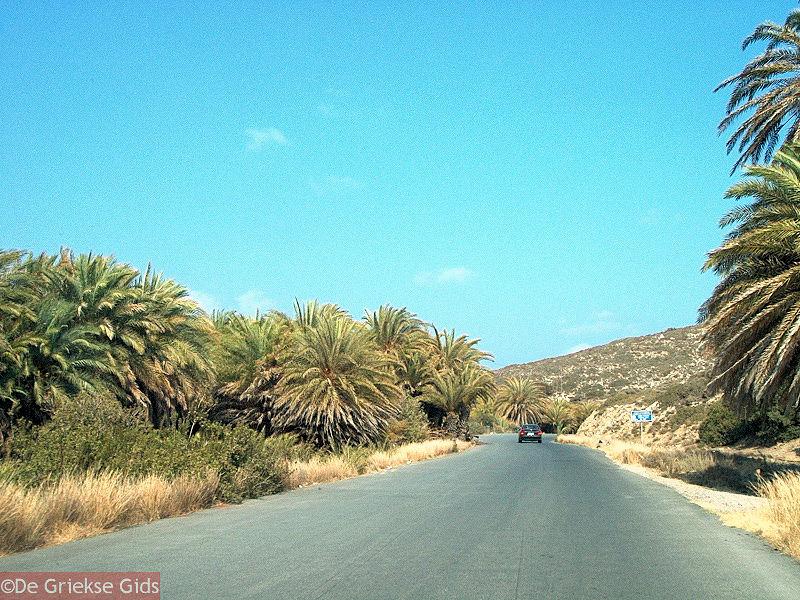 ... JustGreece.com Vai Crete - Lassithi Prefecture - Photo 1 - Foto van JustGreece.