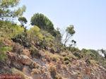 JustGreece.com Petaloudes - Valley of Butterflies Rhodes - Dodecanese Greece photo 5 - Foto van JustGreece.com