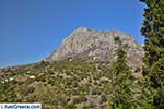 JustGreece.com Myrties - Island of Kalymnos -  Photo 1 - Foto van JustGreece.com