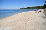 Golden Beach near Pefkochori | Kassandra Halkidiki | Greece  Photo 1 - Photo JustGreece.com