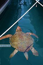 Megisti Kastelorizo - Kastelorizo island Dodecanese - Photo 76 - Photo JustGreece.com