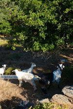 Pera Meria   Overal eikenbomen   Kea (Tzia) Photo 7 - Photo JustGreece.com
